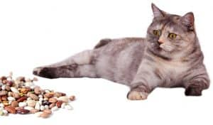 Can Cats Eat Beans: Top Key Points Every Owner Should Know 5