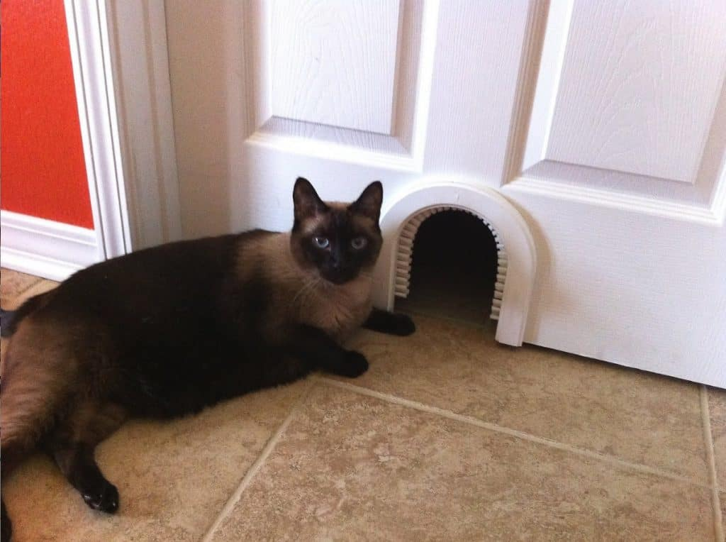 Top 6 Best Cat Doors Reviews 2021: Comprehensive Buyer's Guide 11