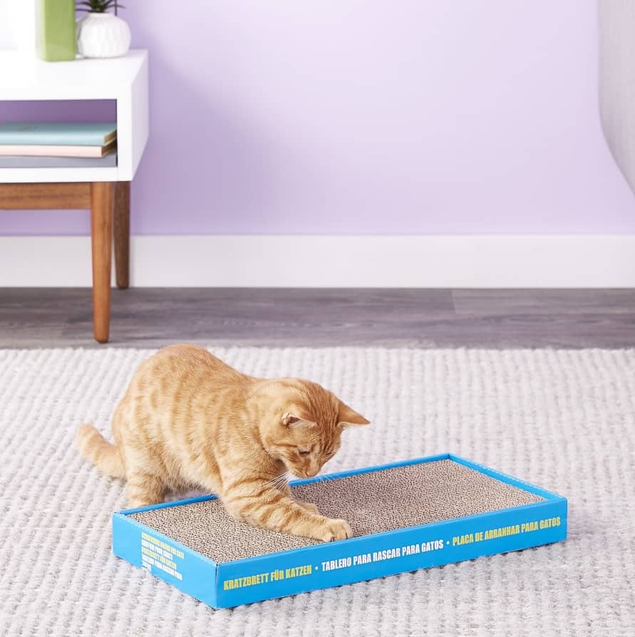 Best Cat Scratching Post: Comprehensive Reviews and Buyer Guide for 2021 29