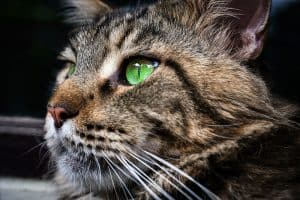 200+ Tabby Cat Names: From the Quirky to the Cute and Famous 9
