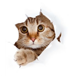 200+ Tabby Cat Names: From the Quirky to the Cute and Famous 2