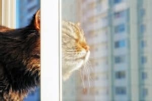 The Best Cat Window Perch of 2020: Exclusive for Felines Who Love Comfort 28