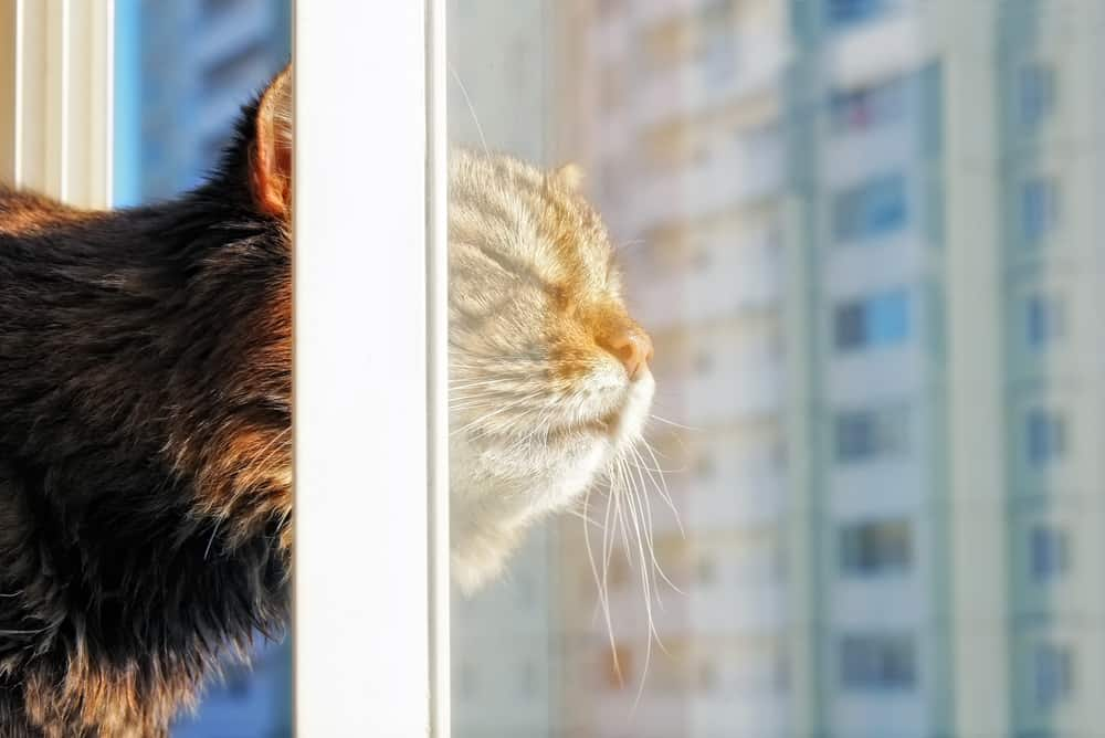 The Best Cat Window Perch of 2021: Exclusive for Felines Who Love Comfort 28
