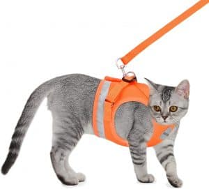Best Cat Harnesses of 2021: A Comprehensive Guide 21