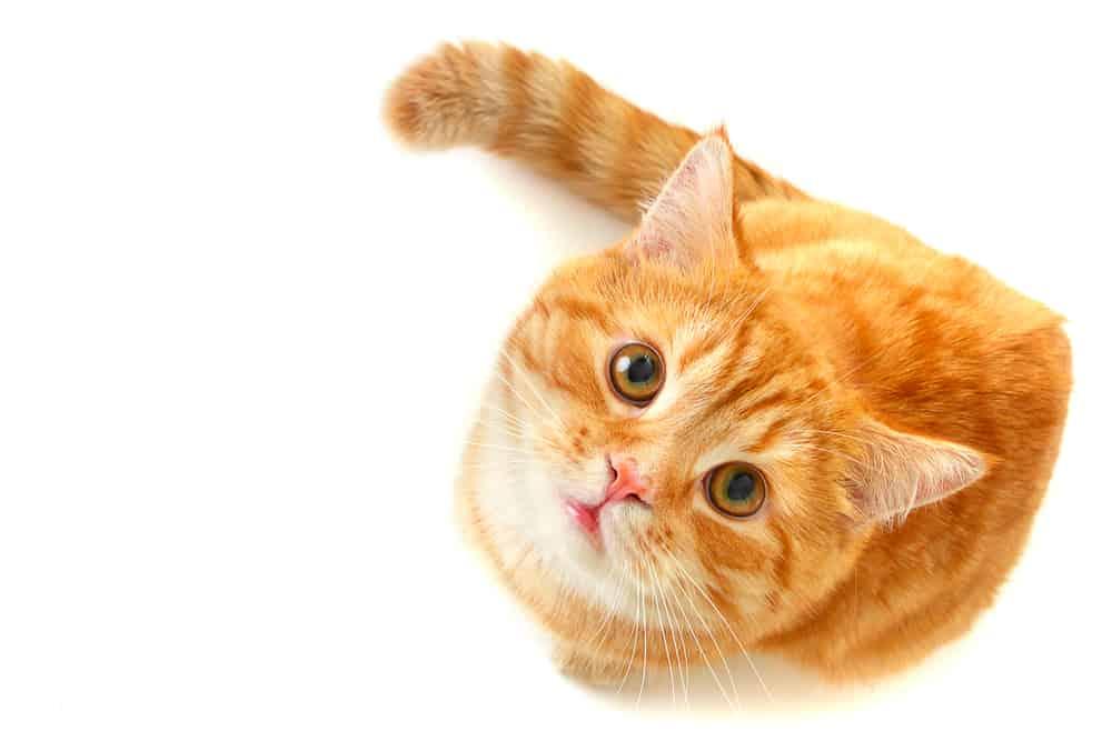 248 Orange Cat Names For All Ginger Felines 4