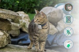 Best Cat Trackers for 2020 That Will Make Your Lives Easier 20