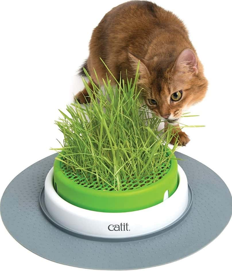 Top 13 Best Cat Toys Reviews - Cool And Engaging Toys For Indoor Cats (And Kittens!) 26