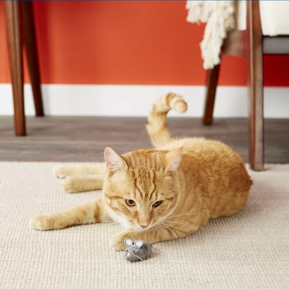 Best Interactive Cat Toys - Automatic Toys For Your Feline! 17