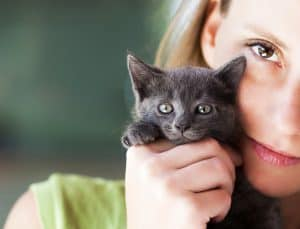 Can Cats See Color? Know How They See The World 4