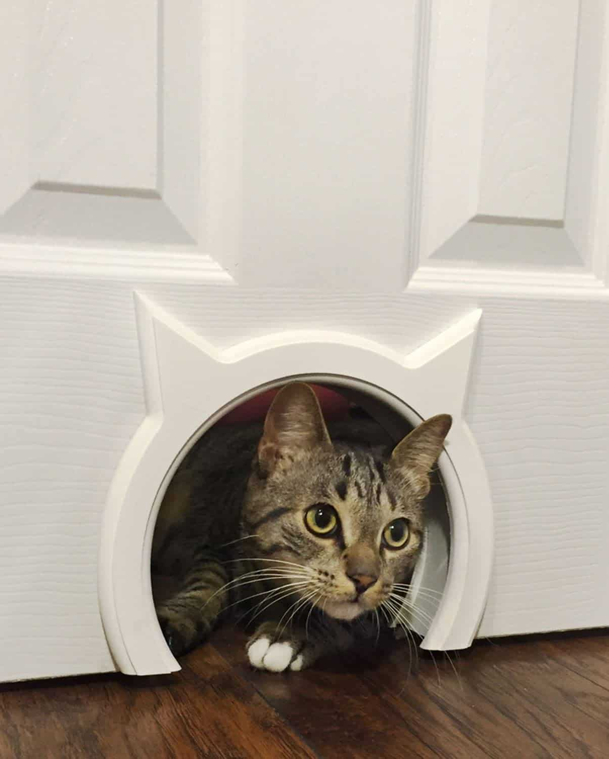 Top 6 Best Cat Doors Reviews + Complete Cat Door Buyer's Guide (2020) 6