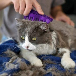 The Best Cat Brushes of 2021: For Healthy and Beautifully Groomed Cats 19
