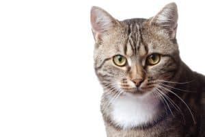 200+ Tabby Cat Names: From the Quirky to the Cute and Famous 10