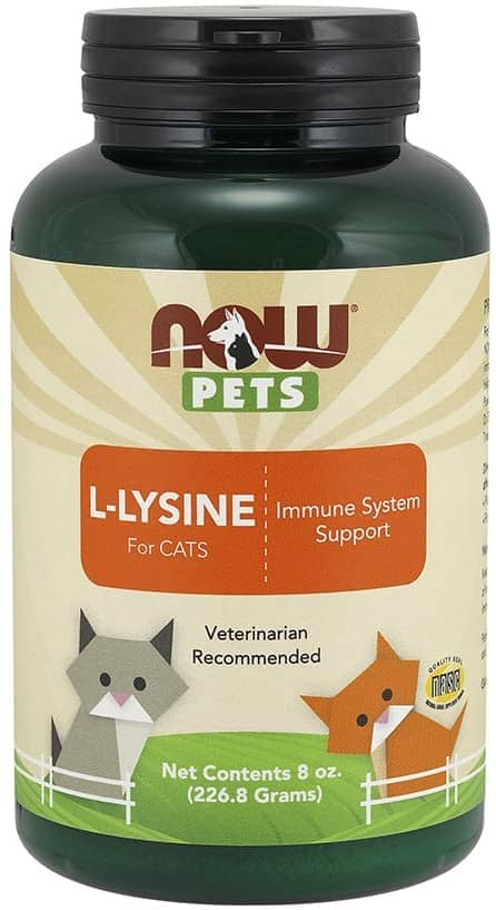 Lysine for Cats - Where to Buy Lysine Powder and Treats? 3