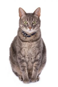 200+ Tabby Cat Names: From the Quirky to the Cute and Famous 11