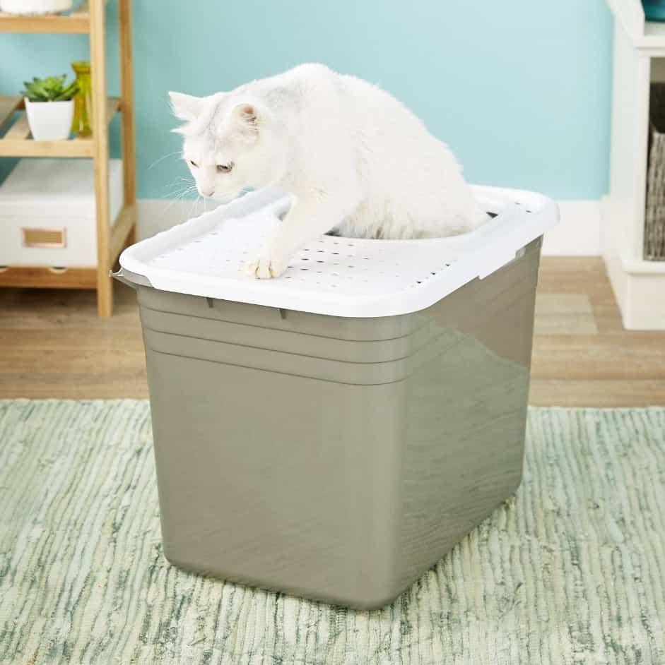 5 Best Top Entry Litter Box for Cats: 2021 Ultimate Guide 11