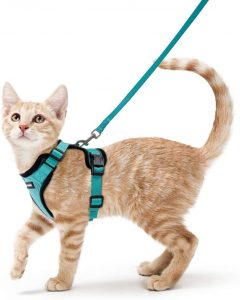Best Cat Harnesses of 2021: A Comprehensive Guide 27