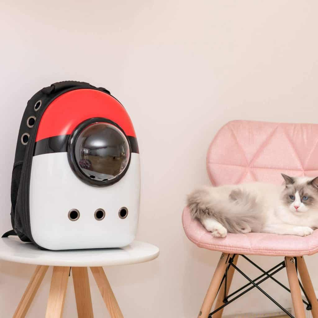 Best Cat Backpacks [year]: Complete Buying Guide 12