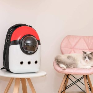 Best Cat Backpacks 2020: Examples, Buying Guide and How To Use 12