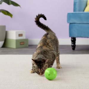Best Interactive Cat Toys - Automatic Toys For Your Feline! 27