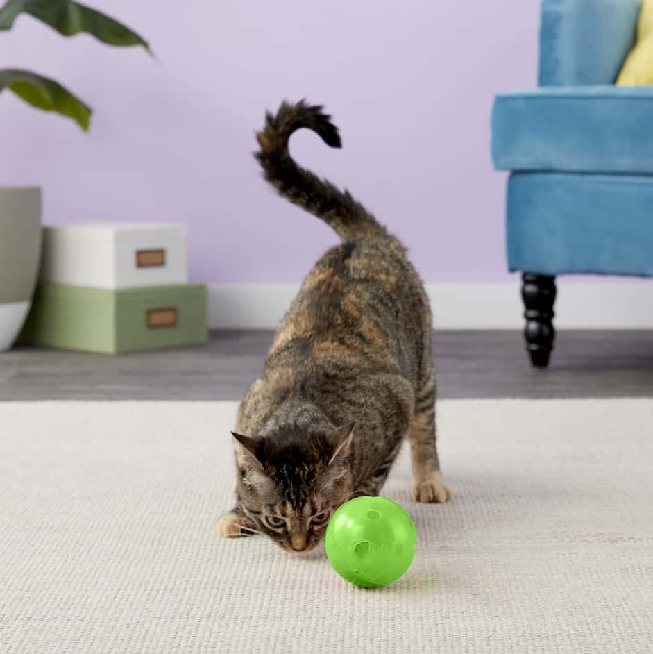 Best Interactive Cat Toys - Automatic Toys For Your Feline! 26