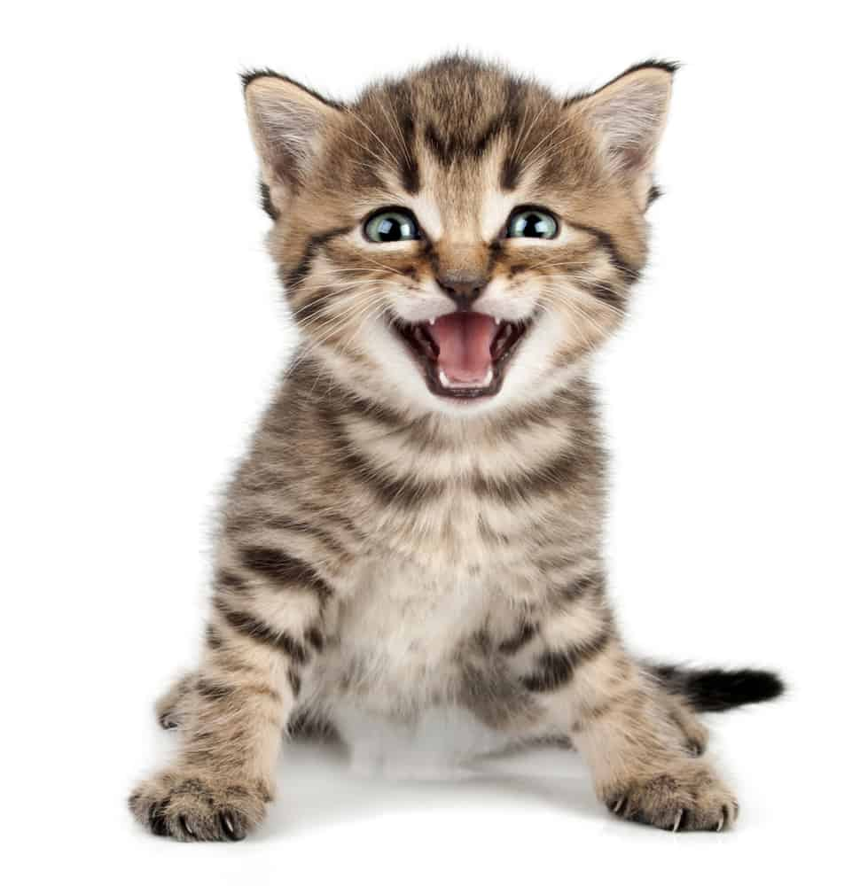 Top 500 Most Popular Female Cat Names 4