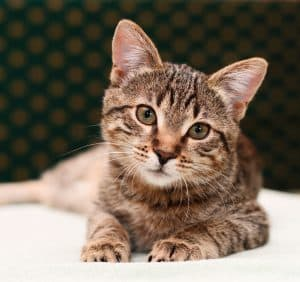 200+ Tabby Cat Names: From the Quirky to the Cute and Famous 4