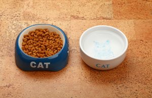 2020 Applaws Cat Food Review: Naturally Nutritious Cat Food 1