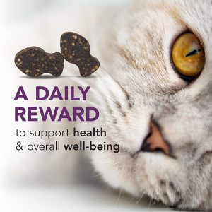 Lysine for Cats - Where to Buy Lysine Powder and Treats? 10