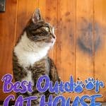 Best Outdoor Cat House for 2021 Plus Reviews of Other Top Picks