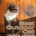 Best Outdoor Cat House for 2020 Plus Reviews of Other Top Picks