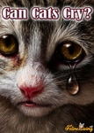Can Cats Cry? Do They Suffer Depression Too? Find Out Here!