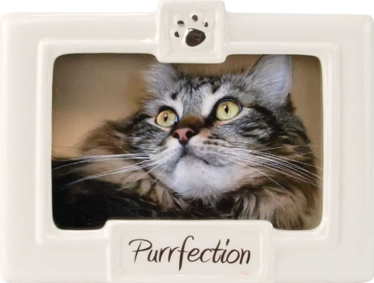 50+ Paw-some Gifts for Cat Lovers to Fit Any Budget! 36