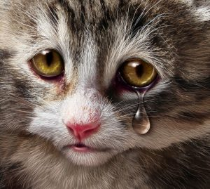 can cats cry