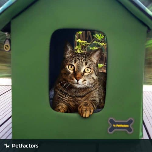 Best Outdoor Cat House for 2020 Plus Reviews of Other Top Picks 29