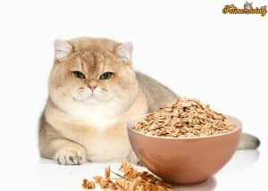 Can Cats Eat Oatmeal? Here Are 5 Reasons Why Oatmeal Is A Healthy and Guilt-Free Snack For Your Cat 7