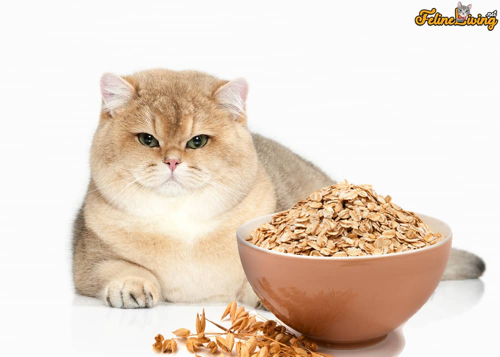 Can Cats Eat Oatmeal? 5 Reasons Why It Is A Healthy and Guilt-Free Snack 5