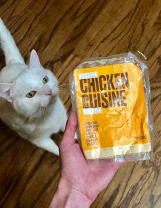 Snowbelle's Story: A Phe-nom-enal Feline Turnaround 1