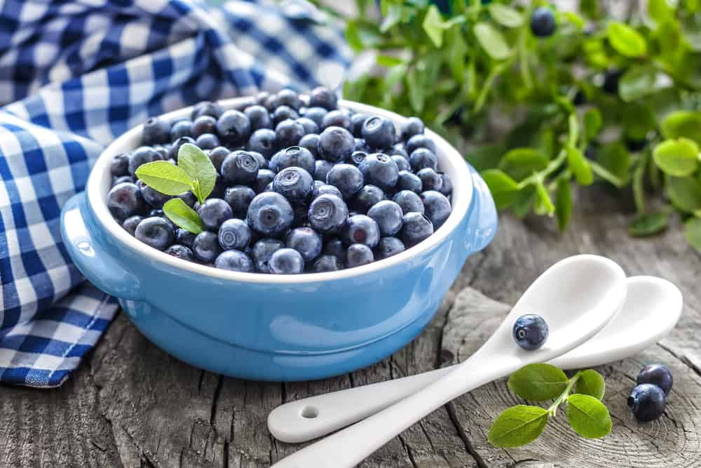 Can Cats Eat Blueberries? Here are 4 Reasons Why It's An Exquisite Treat To Benefit From! 3