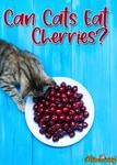 Can Cats Eat Cherries? 5 Burning Questions Answered