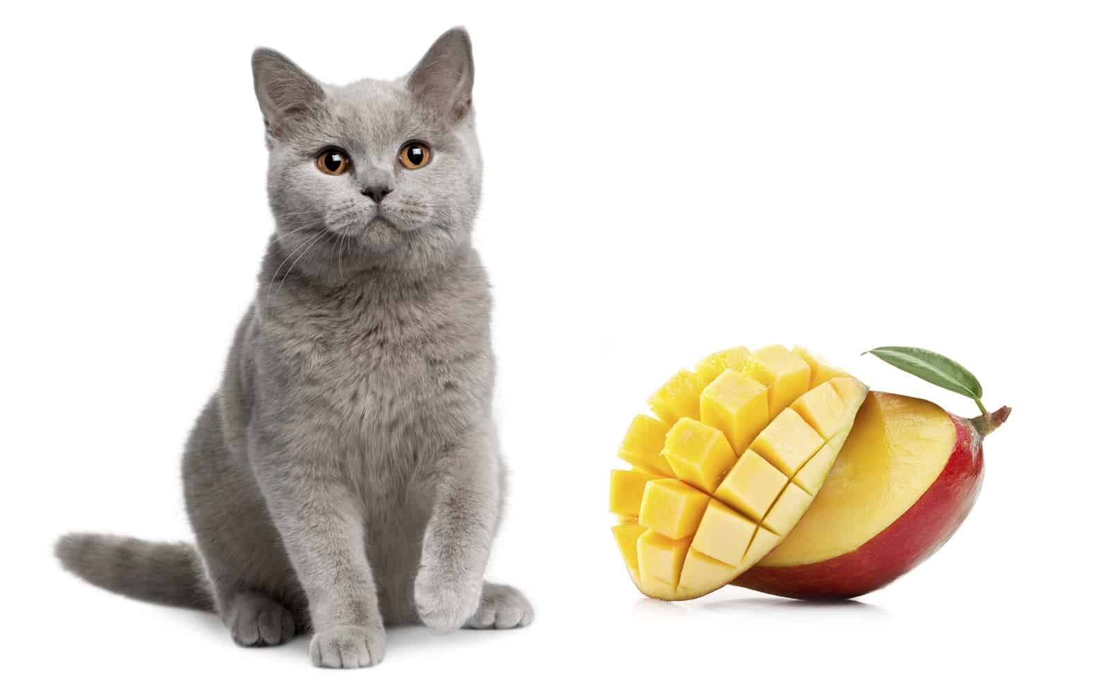 can cats eat mango
