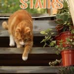 Cat Stairs Reviews 2021: Plus Step by Step DIY Guide