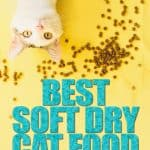 The Best Soft Dry Cat Food: 2021 Buyer's Guide and Review