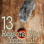 How Long Can a Cat Go Without Eating? 13 Reasons Why Your Cat is Not Eating