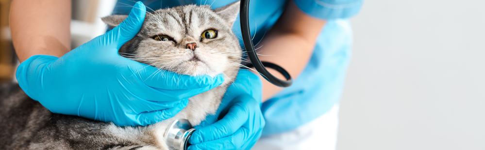 Can Cats Have Allergies? Can Cats Be Allergic to People? 1