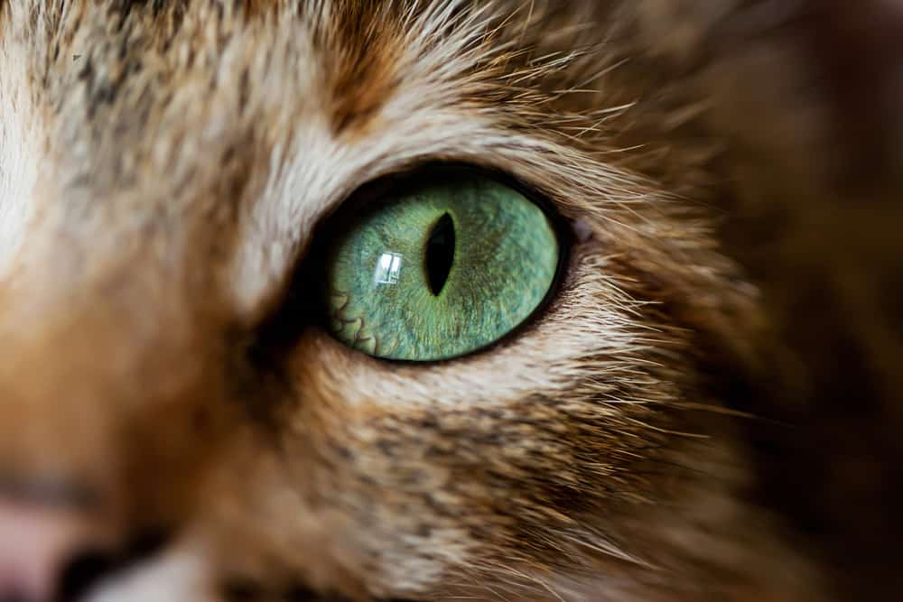Can Cats See in the Dark? Discover How Cats See the World at Night 2