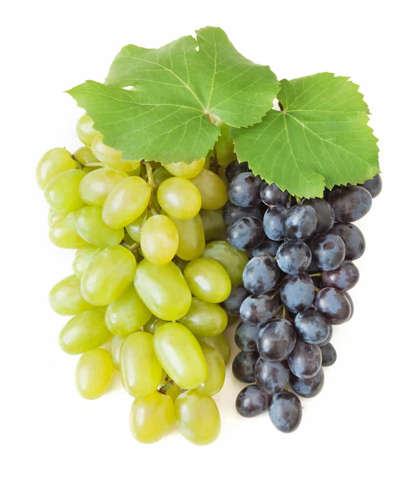 Can Cats Eat Grapes? Are Grapes Healthy or Deadly? 1