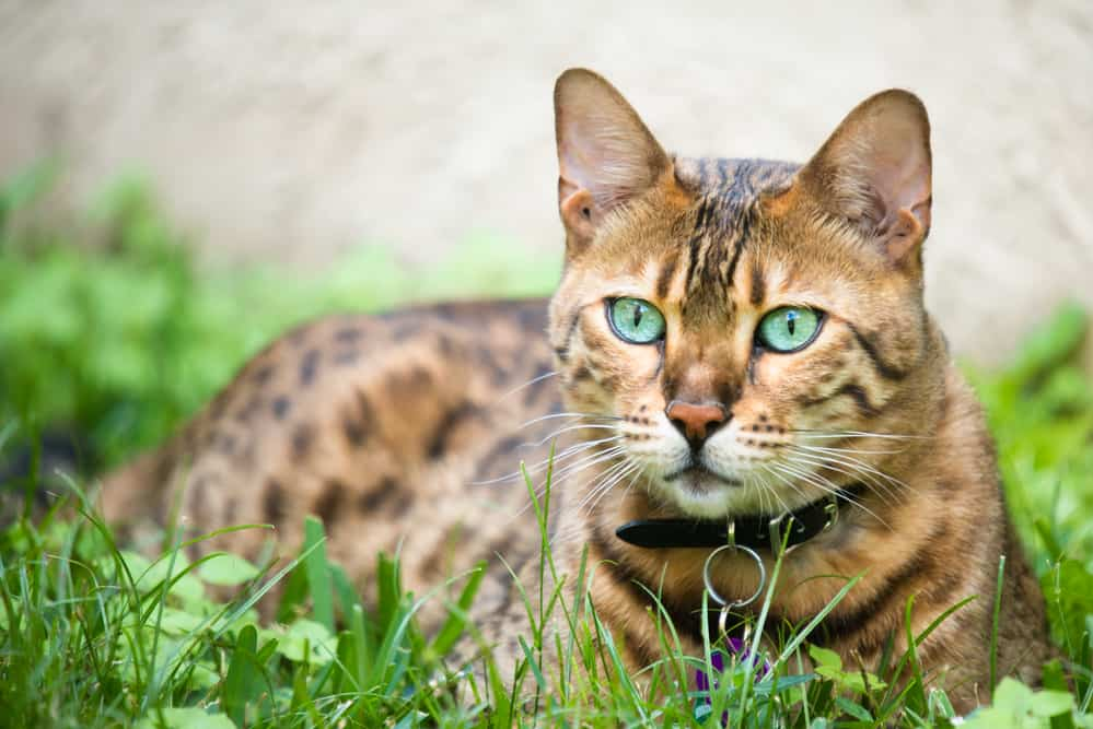 Can Cats See in the Dark? Discover How Cats See the World at Night 1