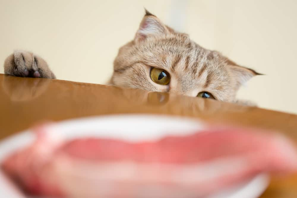Can Cats Eat Pork