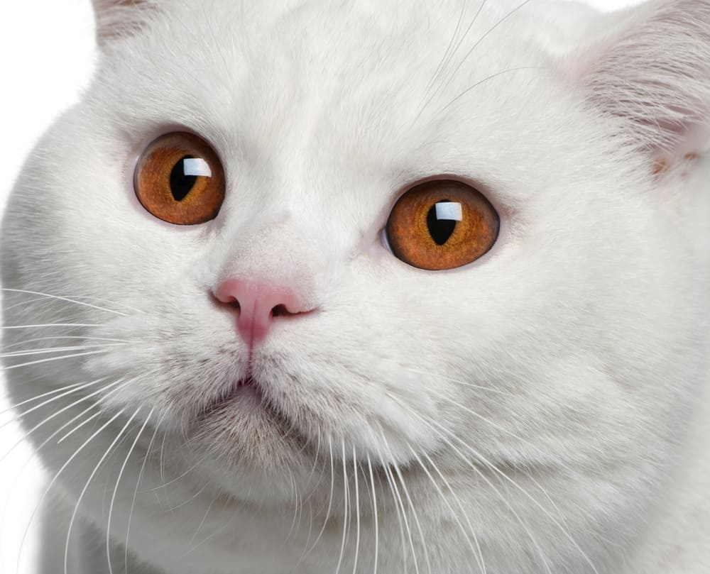 Can Cats See in the Dark? Discover How Cats See the World at Night 3
