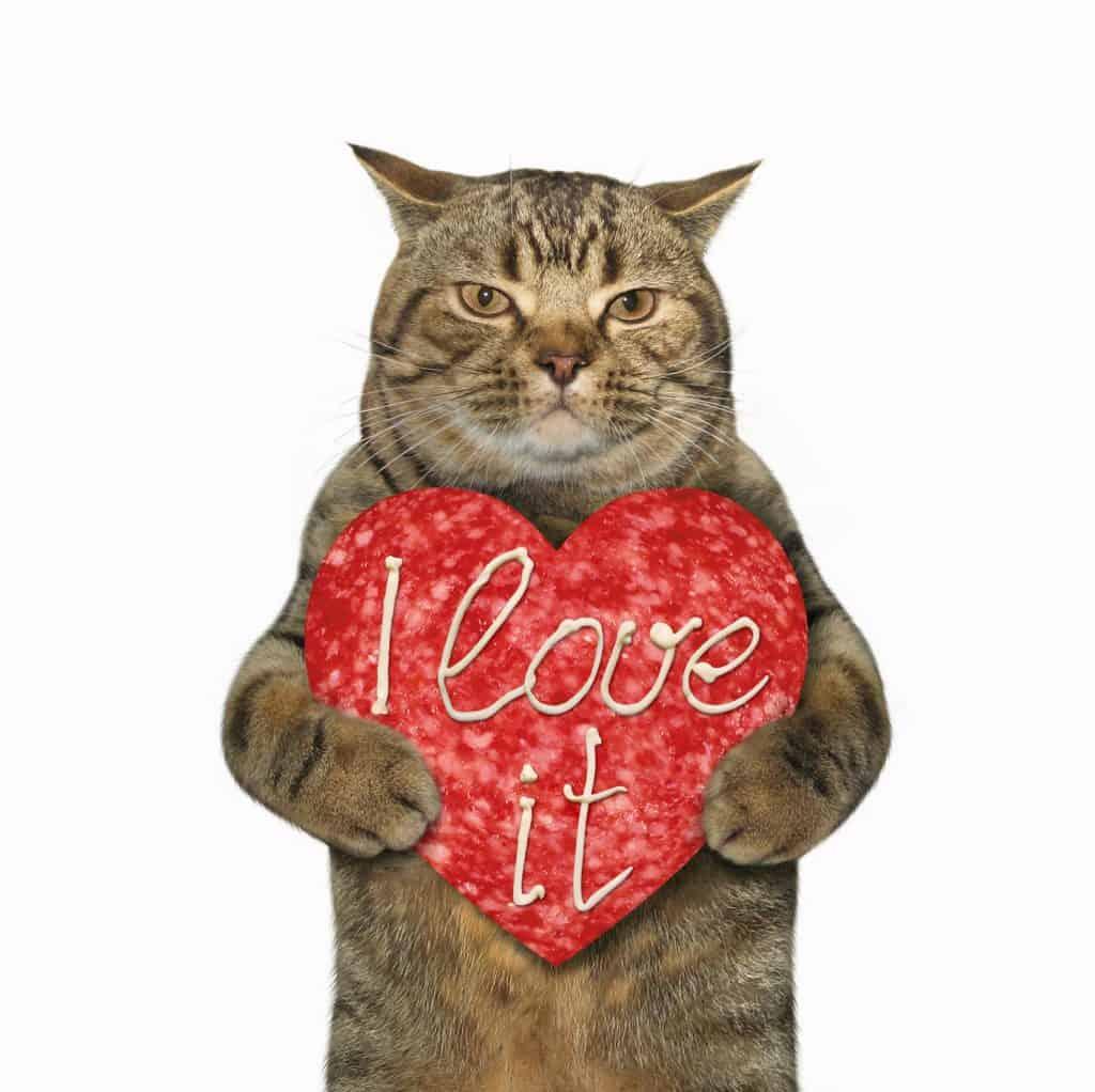 Can Cats Eat Salami